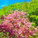 桜の種類2019!北海道の桜の種類・名所・見頃・開花時期を紹介!