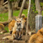 動物愛護週間2019!宮城県や新潟県と北海道のイベントを調査!