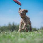動物愛護週間2019!北九州や福岡と沖縄県のイベントを調査!